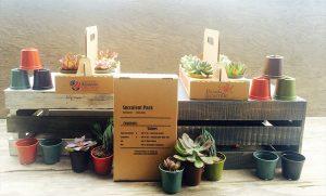 succulent 6pack kit